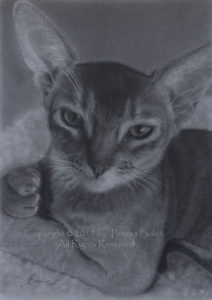 Original drawing by Teresa Bolen in graphite on Hahnemuhle Nostalgie paper.