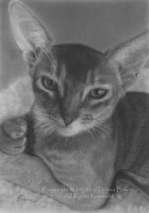A4 size graphite pencil drawing by Teresa Bolen; reference photos by Jenny Cline