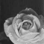 A5 size graphite pencil drawing on paper by Teresa Bolen; reference photo by taipetom