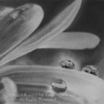 A5 size graphite pencil drawing on paper by Teresa Bolen; reference photo by MiniMe-70